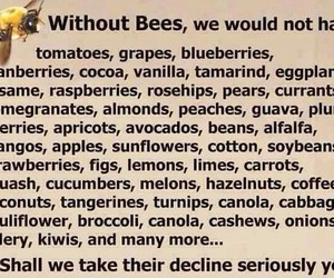 bees, important, and vanilla image