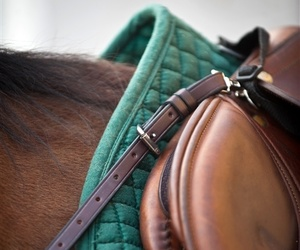 brown, horse, and green image