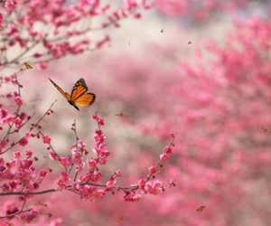 beautiful, pink, and butterfly image