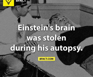 autopsy, 8fact, and brain image