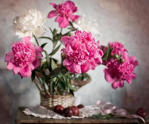 beauty, nature, and peonies image
