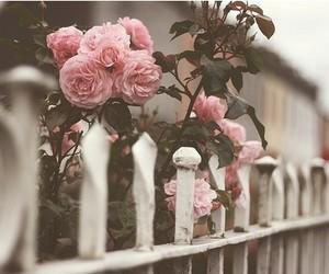 rosas rosas, hermosas, and no hay nada igual image
