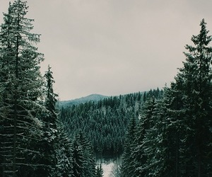 forest, trees, and winter image