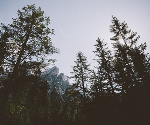 trees, photography, and forest image