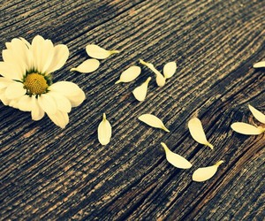 flowers and petals image