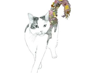cat and transparent image
