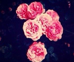 flowers, rose, and чайные розы image