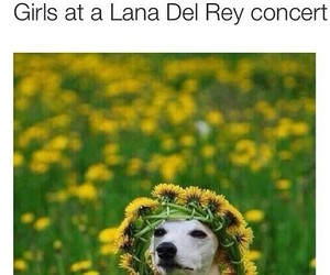 festival, girl, and dog image