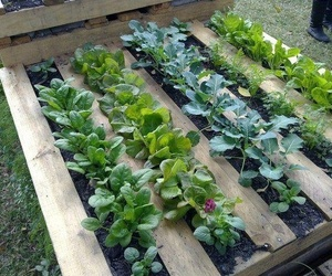 garden, pallet, and raised beds image