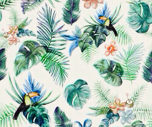 background, wallpaper, and tropical image