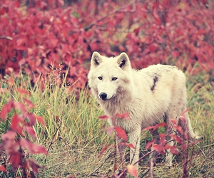 beautiful, flowers, and wolf image