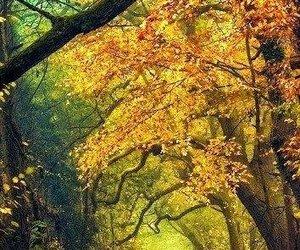 autumn, landscape, and tree image