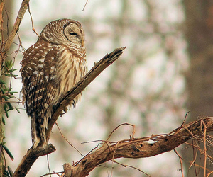 owl, animal, and nature image