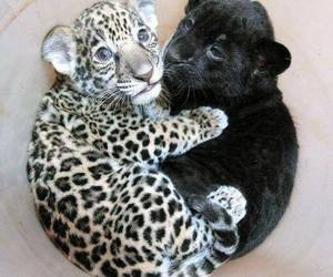 animal, difference, and babes image