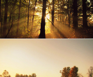 autumn, diptych, and field image