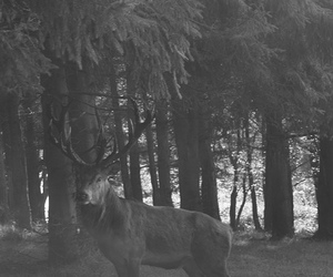 antlers, nature, and stag image