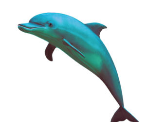 dolphin and overlays image