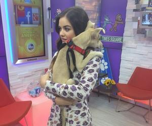 dog, lucy hale, and pretty little liars image