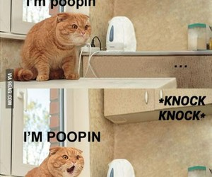 cat, funny, and laugh image