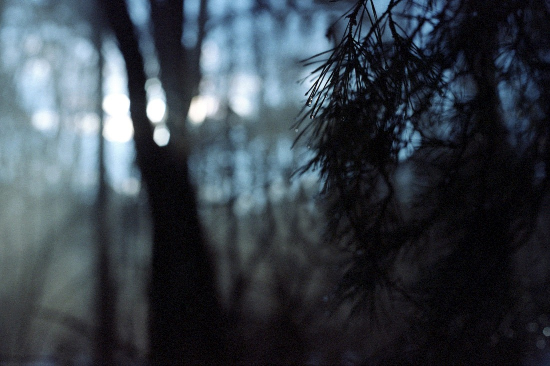 trees and deep forest image