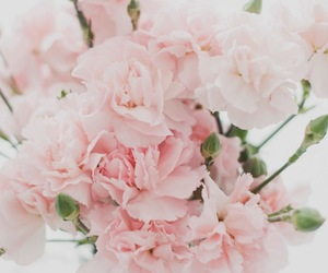 floral, pink, and flower image