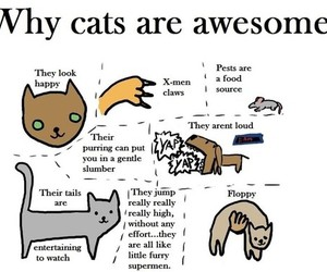 cute cats, cats, and kittens image