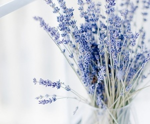 flowers, blue, and lavender image