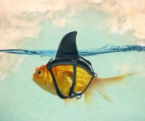 تفسير حلم اكل السمك نيء معنى السمك في المنام