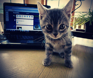 cat, computer, and cute image