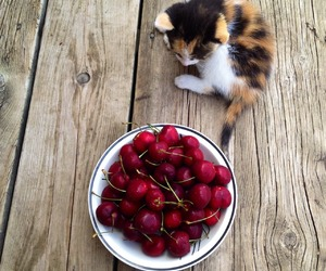 cat, cherry, and kitty image