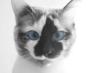 cat, animal, and blue image