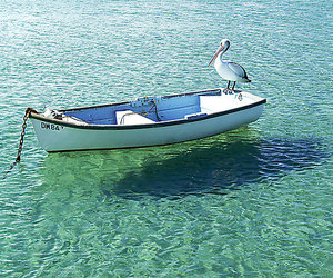 amazing, pelican, and water image