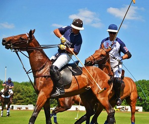 horses and Polo image