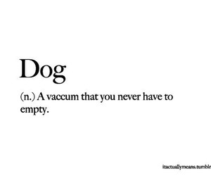 dog, funny, and noun image