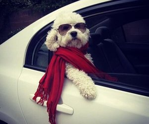 dog, car, and puppy image