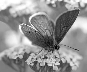 black and white, butterfly, and flower image