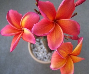 beautiful, exotic, and flowers image