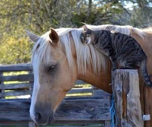 animals, farm, and horse image
