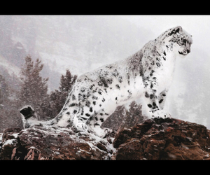 cat, mountain, and snow image
