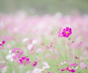 colors, flowers, and oink image