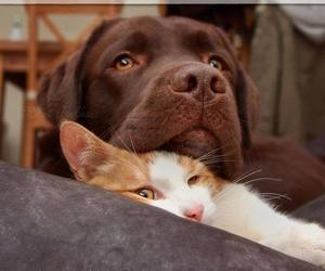 cats, dogs, and puppy image