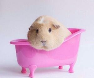animals, bathtub, and cute image