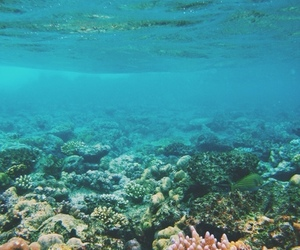 coral, sea, and blue image