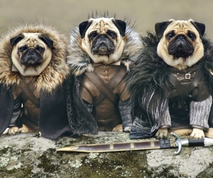 dog, pug, and game of thrones image