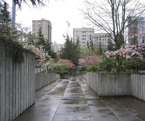 flowers, pale, and city image