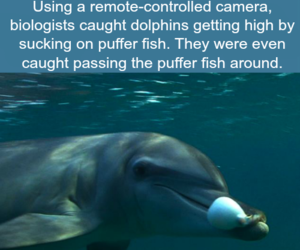 facts, dolphins, and weird image
