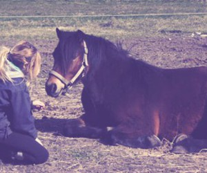 horse, natural, and love image
