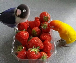 bird, parrot, and strawberry image