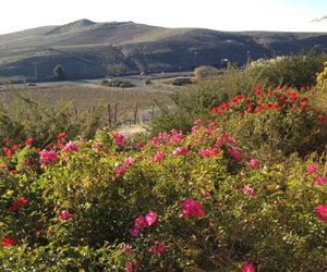 california, flowers, and hills image