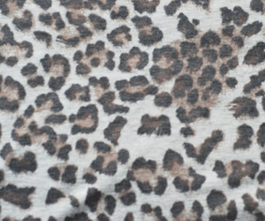 animal print, fashion, and leopard print image